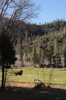 My cousin and I had the meadow to ourselves the night we camped in Yosemite. We ate our breakfast with Mule Deer who came down to the valley to graze- these were the only large wild animals we came across.
